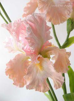 Clay handmade pink irises, flowers from polymer clay: Розовые ирисы. Керамическая флористика. - В НАЛИЧИИ - Fito Art
