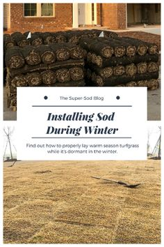 Installing Sod In Winter. How To Install Dormant Sod During Winter And Help  It Take