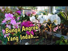 Bunga Angrek Yang Indah Di Jalan Raya Cikopo Bungursari Purwakarta... #part2 - YouTube Plants, Plant, Planting, Planets