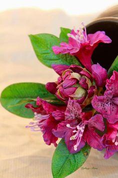 Rhododendron - Cake by  Elena Ujshag