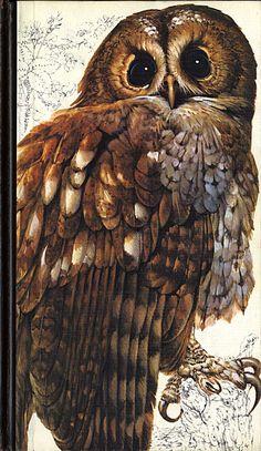 """Norges fugleliv"" Owl, Bird, Reading, Books, Animals, Livros, Animais, Animales, Animaux"