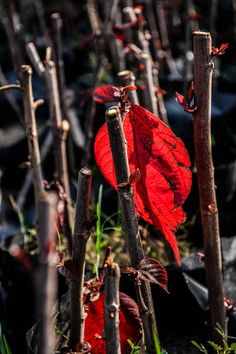 Burning Red Photo by Anjali Seema Shukla -- National Geographic Your Shot