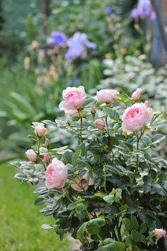 Shabby soul - my garden