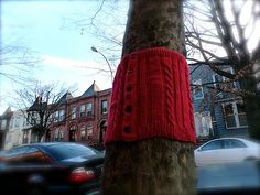 One of the tree sweaters on 16th Street, South Slope, Brooklyn