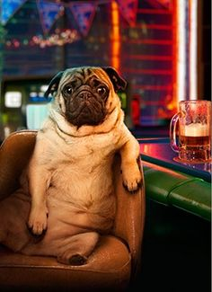 I would love to walk into a bar and find nothing but pugs. That would be hilarious.