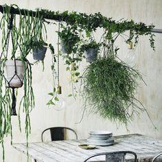DIY: 5 fede idéer til dine indendørs planter | Femina