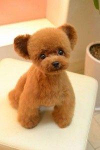 promptreport.com wp-content uploads 2014 06 teddy-bear-200x300.jpg