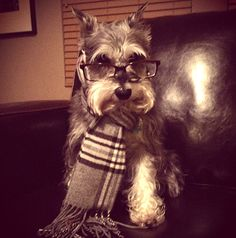 Ahahaha.... Awe. Professor Dog judges you.