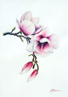 """ MAGNOLIAS "" Watercolour on acid-free paper.   35 X 50 cm 