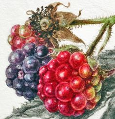 Dianne Sutherland: Search results for leaves 3d Painting, Watercolour Painting, Watercolours, Watercolour Tutorials, Fruit Art, Botanical Prints, Flower Art, Christmas Wreaths, Arts And Crafts