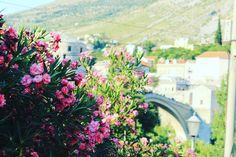 Scenic architecture and blooming flowers in the city of Mostar. Visit our website: www.tourguidemostar.com #tourguidemostar #mostar #visitmostar #flowers #photography #travel #travelworld #architecture #blooming #bosniaandherzegovina