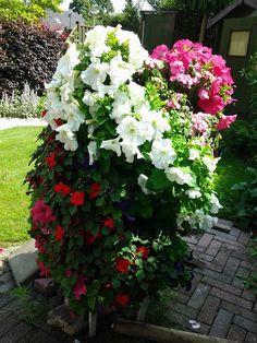 Ik ben even de naam van deze bloemen twieit van deze tweede aanplant, wie weet welke het zijn?