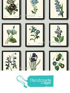 Botanical Print Set of 9 Antique Beautiful Redoute Blue Flowers Iris Water Lily Plumbaqgo Primula Gentian Butterfly Plants French Garden Nature Home Room Decor Wall Art Unframed from LoveThePrint http://www.amazon.com/dp/B019FR3O9M/ref=hnd_sw_r_pi_dp_EDMrxb0FS8V6F #handmadeatamazon