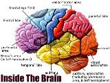 Inside The Creative Brain