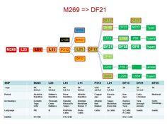 Celtic Migrations M269 > DF21