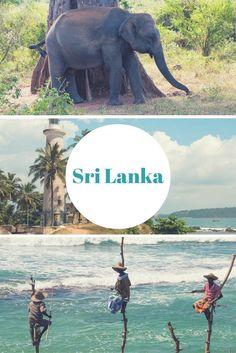 Sri Lanka: 15 Gründe, dorthin zu reisen - inkl. Elefanten, Galle & Stelzenfischer