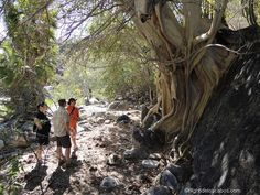 Can you imagine walking next to a river, alongside the mountains, admiring the wonderful vegetation, water slides and waterfalls in Cabo? Hike to Fox Canon in Los Cabos with this awesome tour available on Jetset Times Shop! http://jetsettimes-shop.com/collections/high-tide-los-cabos/products/hiking-to-the-fox-canyon