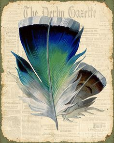 Elegant Feather-a Poster By Jean Plout
