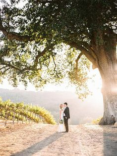 Charming Winery Wedding at Magic Hour   Danielle Poff Photography   Natural Elegance at a Southern California Vineyard