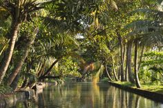 Kerala Backwaters by houseboat in India. This must happen.