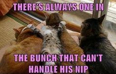 Haha! Catnip amateur :)