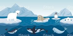 Arctic Animals Character and Background royalty-free stock vector art