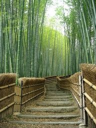 Bamboo Trees at the Adashino-nenbutsuji Temple