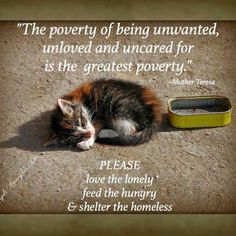 Humans are responsible for the overpopulation of cats and dogs. It's our responsibility to take care of those who can't take care of themselves and are only here because of irresponsible humans. If you buy a pet from a breeder or pet shop, you are part of the problem. Be a hero, rescue a shelter animal.