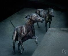 Infected Dog 01 - I Am Legend Infected Dog 01 I Am Legend, Legend Images, Zombie Art, Real Dog, Wolfhound, Creature Design, Character Description, Great Movies, Werewolf