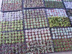 Amazon.com : 36 Mixed Succulent Spring Collection : Succulent Plants : Patio, Lawn & Garden $46.95 + $19.49 shipping 4 1/2 stars