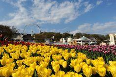 에버랜드 튤립축제 (Tulip Festival in Everland)