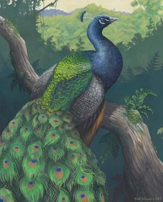 "ewilloughby:  This was a belated gift for a good friend's birthday, of her favorite animal - the Indian peafowl, Pavo cristatus. I wanted to paint the animal in a more naturalistic pose than is typical for the extravagant males, with his gorgeous train in view without being displayed. Here he sits on a branch and ponders the mysteries of existence as he overlooks his native florid Indian jungles. Gouache on mixed media board, 16"" x 20""."