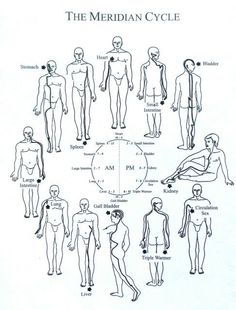 What Is Acupressure The meridian cycle. Circadian rhythm can be set by the sun and moon light. Natural light, blue or white spectrum, is what tells our bodies what time it is, which hormones to produce, and basically how to function! Meridian Acupuncture, Acupuncture Points, Acupressure Points, Qigong, Spiritual Eyes, Endocannabinoid System, Spirit Science, Traditional Chinese Medicine, Yin Yoga