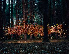 Leaves, Thomas Jacksson