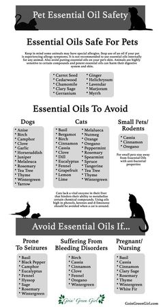 oil for cats Pet Essential Oil Safety Hey guys! Do you like essential oils, not sure which ones are safe for your lovely pets? A list compiled as a quick and easy guide for your reference! Dog Safe Essential Oils, Essential Oil Safety, Essential Oil Diffuser Blends, Essential Oil Uses, Young Living Essential Oils, Oils For Dogs, Young Living Oils, Aromatherapy Oils, Doterra Essential Oils