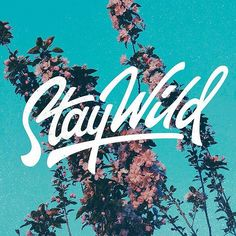 "Stay Wild <a class=""pintag"" href=""/explore/typography/"" title=""#typography explore Pinterest"">#typography</a> <a class=""pintag"" href=""/explore/inspiration/"" title=""#inspiration explore Pinterest"">#inspiration</a> <a class=""pintag searchlink"" data-query=""%23lettring"" data-type=""hashtag"" href=""/search/?q=%23lettring&rs=hashtag"" rel=""nofollow"" title=""#lettring search Pinterest"">#lettring</a>"