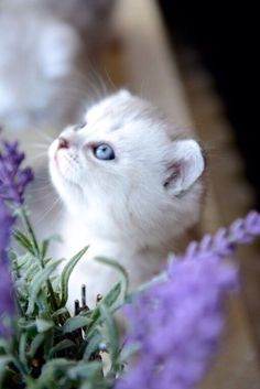 Cats on We Heart It