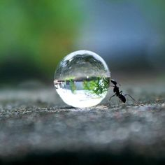 An ant carry the Earth.