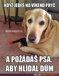 Dogs sick of being indoors Sick Dog, Funny Puns, Parakeet, Ferret, Really Funny, Laugh Out Loud, I Laughed, Funny Animals, Labrador Retriever