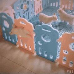 The cutest jailbreak! #dogsfunnycutest