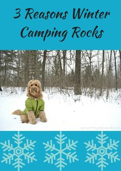 Spencer the Goldendoodle is sharing 3 reasons why he loves winter camping! Click on the picture and find out those three reasons!