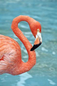 pink flamingo artwork | Pink Flamingo. Photograph - Pink Flamingo. Fine Art Print