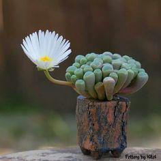 La belleza de las cosas simples. El regalo de la naturaleza.