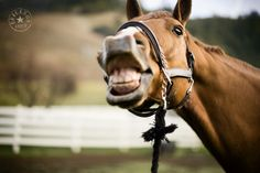 Horse being silly