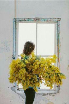 Giant yellow bouquet - Wattle floral portrait with Laura Claire Jones My Flower, Wild Flowers, Beautiful Flowers, Spring Flowers, Spring Bouquet, Cactus Flower, Exotic Flowers, Arte Floral, Mellow Yellow
