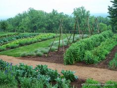 *   The recreation of the Monticello vegetable garden began in 1979 and included two years of archaeological excavation that attempte...