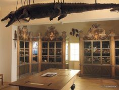 Crocodile at the cabinet of curiosities in Halle (Saale), Germany Saxony Anhalt, Rhineland Palatinate, Halle, Lower Saxony, North Rhine Westphalia, Cabinet Of Curiosities, Curiosity, Strawberry Hill, Peacocks