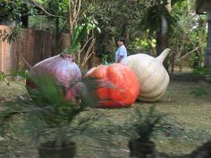 Giant vegetables, real or sculptures?...