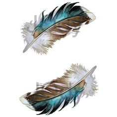 Two Mallard Feathers Archival Quality Print 8 x 10 (€19) via Polyvore featuring home, home decor, wall art, blue green wall art, feather wall art, brown wall art, aqua home decor and twin pack