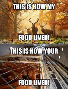 This needs to be shown more often!! You may think hunting is cruel, but you should see how cruel your food is treated. At least I know mine died fast and painless